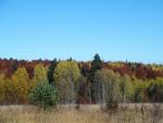 Камышанова поляна. Осень
