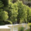 Памятник природы «Лавр ложнокамфорный (45 лет)»