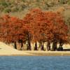 Памятник природы «Роща болотного кипариса»
