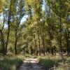 Памятник природы «Лесопарк Приречный»